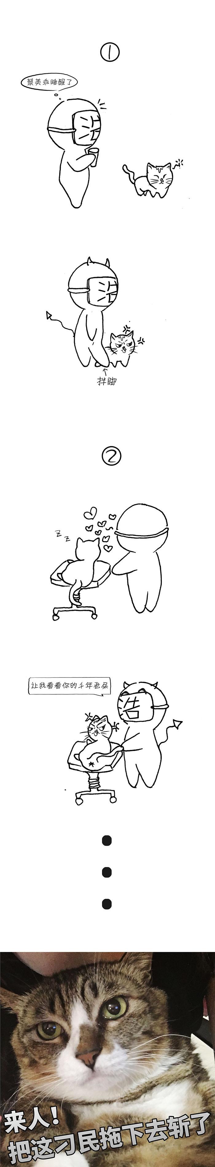 来,喝茶,逗猫~